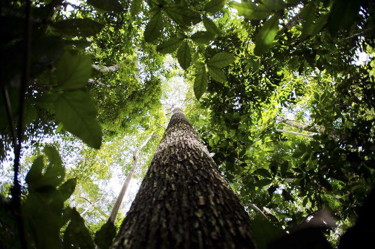 Novo governo terá desafio de garantir cumprimento das metas climáticas