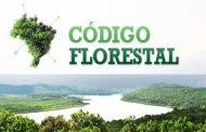 Especialistas alertam para mudanças no Código Florestal
