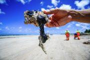 Desastre nas praias do NE é inédito no mundo, diz coordenadora do Ibama
