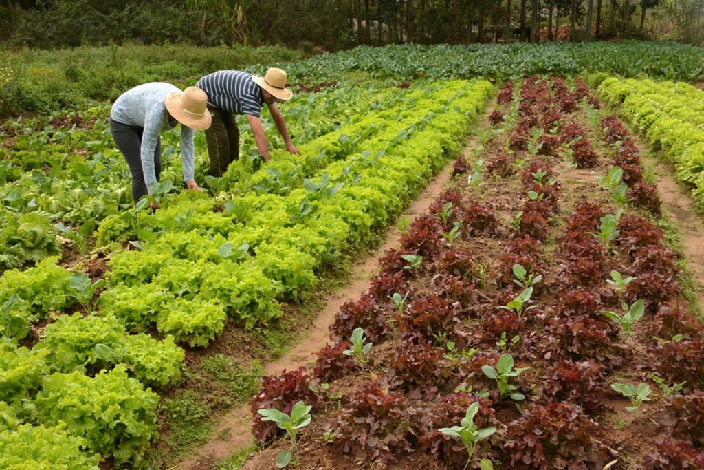 Preocupação com qualidade do alimento deve pautar agricultura no futuro