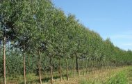 Projeto torna obrigatório destinar 5% de floresta plantada para construção civil