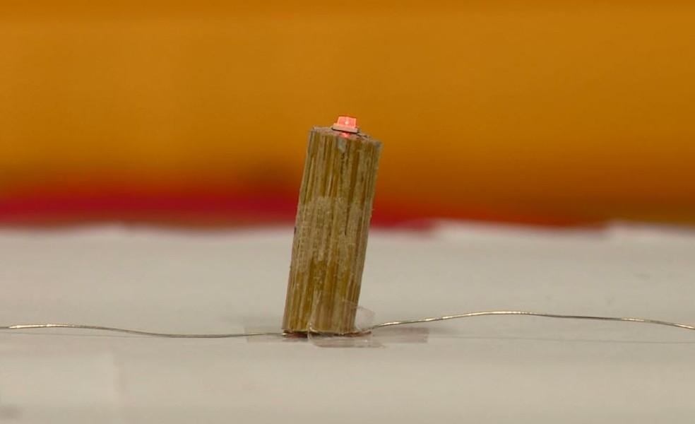 Pesquisa desenvolve uso de bambu como substituto de fios elétricos para construção civil e eletrônica