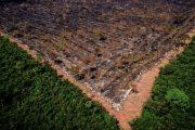 Brasil contraria tendência global e pode ter alta em emissões na pandemia