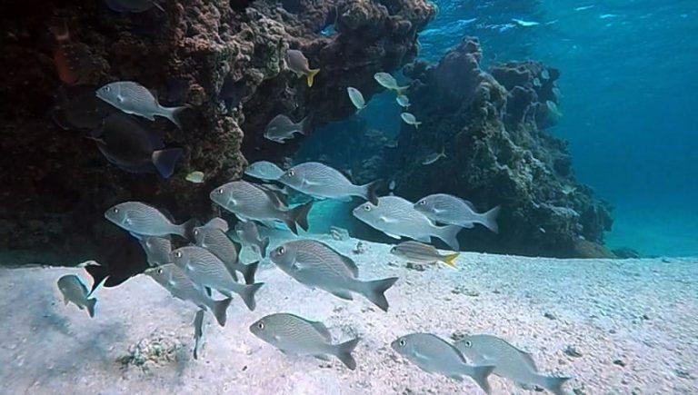 Ambientalistas e parlamentares defendem aprovação da Lei do Mar