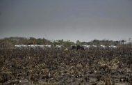 7 das 10 cidades que mais emitiram carbono no Brasil estão na Amazônia e lideram taxas de desmatamento