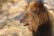 Reforma do IR mantém leão manso com ricos e feroz com trabalhadores